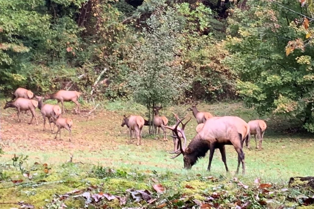 Elk Herd Route 19 Inn